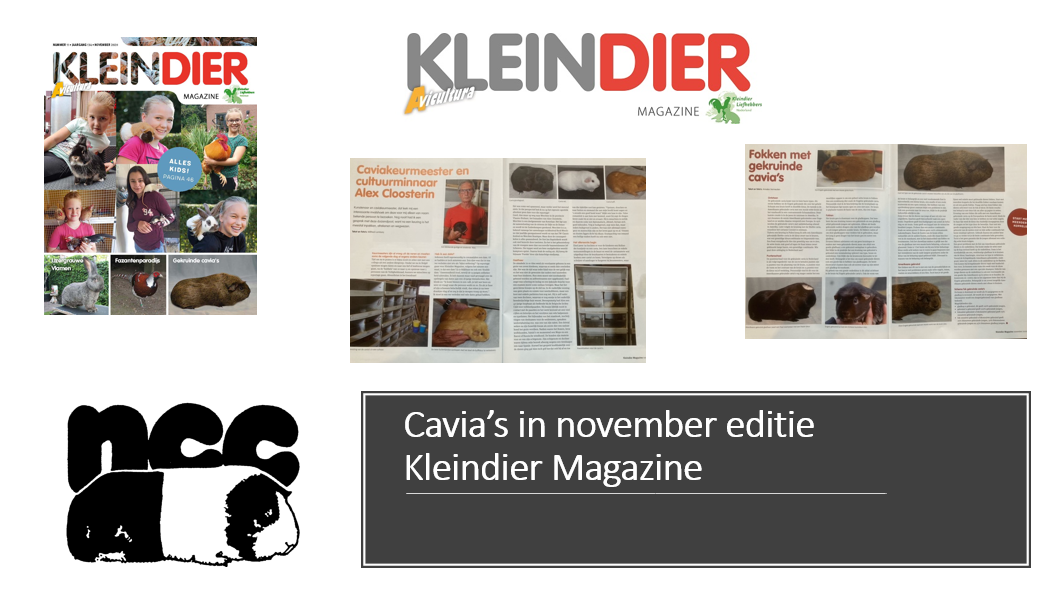Cavia's in november editie Kleindier Magazine